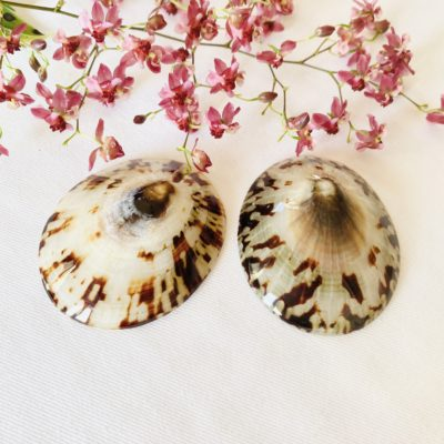 Paire de coquillages Baby Shell